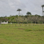 Okolice miejscowości la Pavona w drodze do Tortuguero