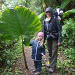 Olbrzymie liście w lasach chmurowych Monteverde