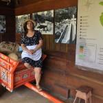 Woz do przewożenia kawy w Kostaryce