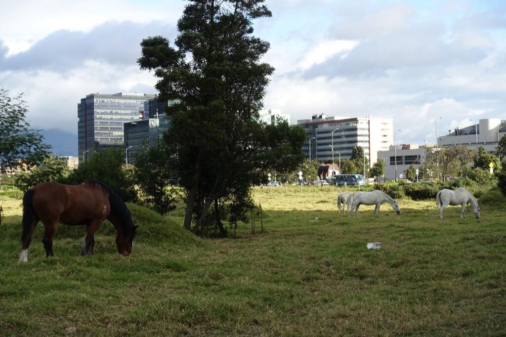 Konie w Bogocie