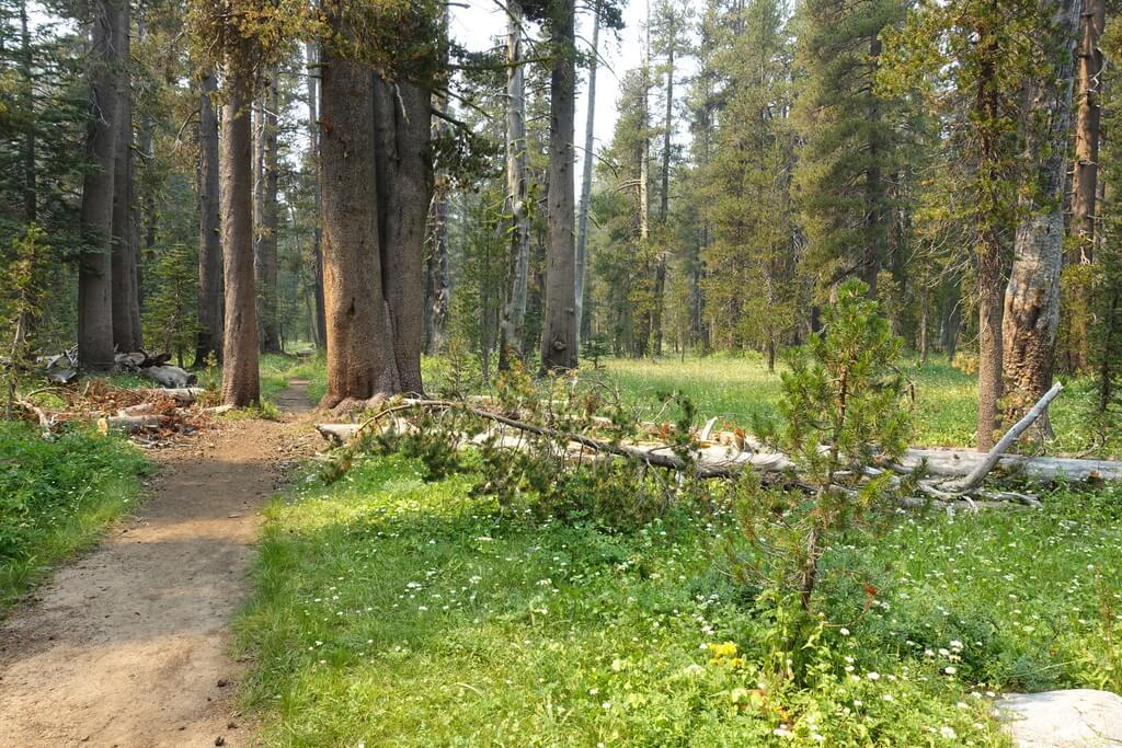 Park Narodowy Yosemite